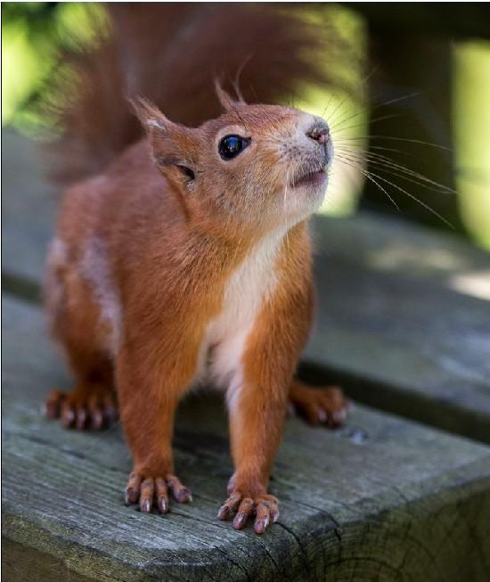 松鼠仰望天空做祈祷状祈求食物