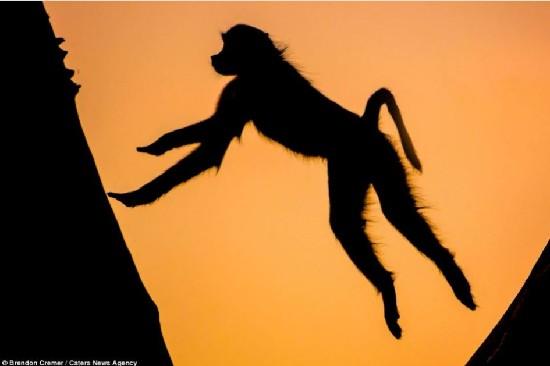 非洲野生动物剪影