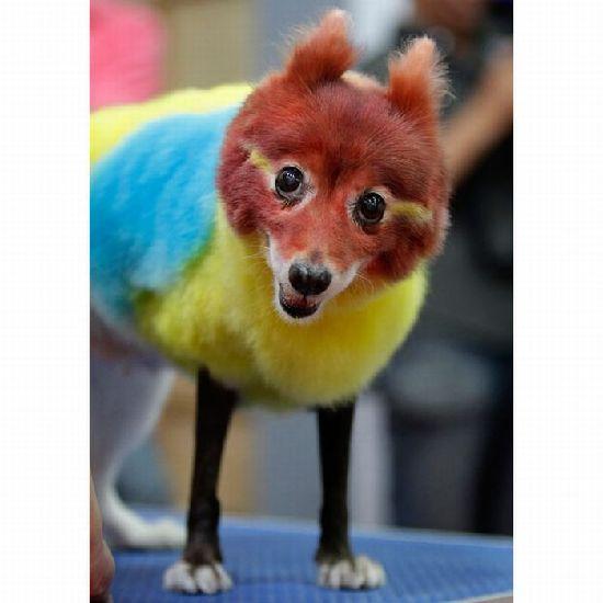 搞笑动物图片:笑破肚皮!