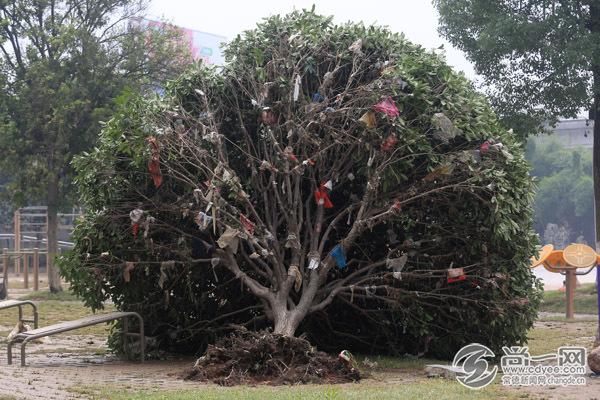 一棵树被洪水连根拔起