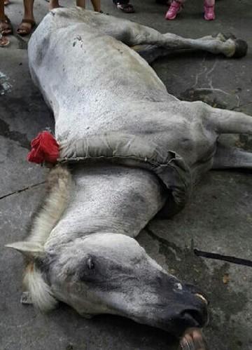深圳野生动物园马匹拉客途中猝死