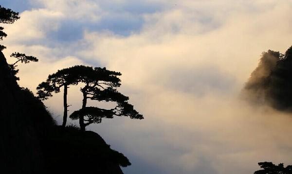 这是10月1日在安徽黄山风景区拍摄的云海景观.