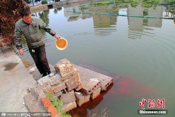出现许多红色浮游动物这些被当地市民称作&quot水蛆&quot样的动物是因为河水