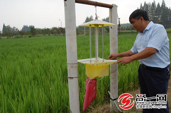 南粳505水稻适不适合在上海南京种植?